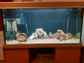 Tank stand full set up for sale
