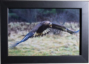 Awesome High Quality Prints! (Wildlife, city, nature, and more!) Cambridge Kitchener Area image 6