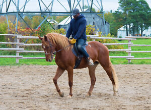 Horse Training: Accepting Training for Late Fall and Winter