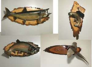 Fish Mounts &  A Pheasant Mount with a Clock