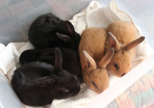 Bunnies for sale. Doveton Casey Area Preview