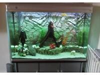 Elite Aquatics Aquarium