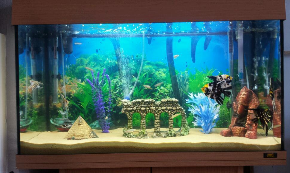 Tropical fish tank complete setup in Clifton, Nottinghamshire ...