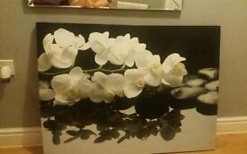 Extra large Orchid canvas
