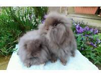 Baby rabbit's