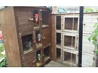 Rabbits and hutches free to good home