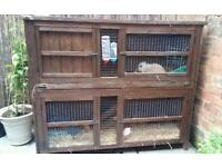 2 mini lion lops, hutch and all accessories