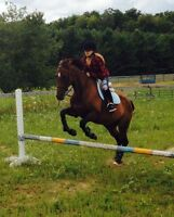 Horse for sale and lots of English and western tack