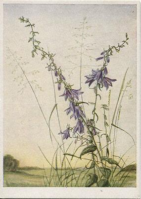Alte Kunstpostkarte - S.K. Brauer - Glockenblume