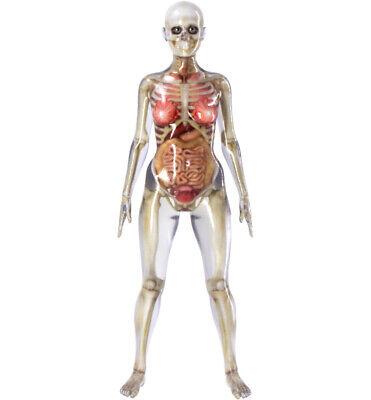 Female Anatomy Model Full Skeleton - Anatomically Correct - Highly Detailed.