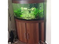 190 litre Trigon fish tank every think in it
