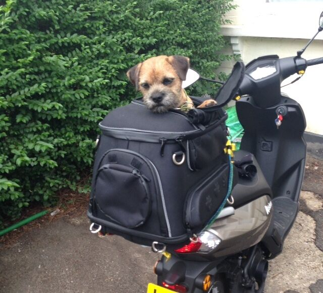 Top Dog Motorcycles Uk
