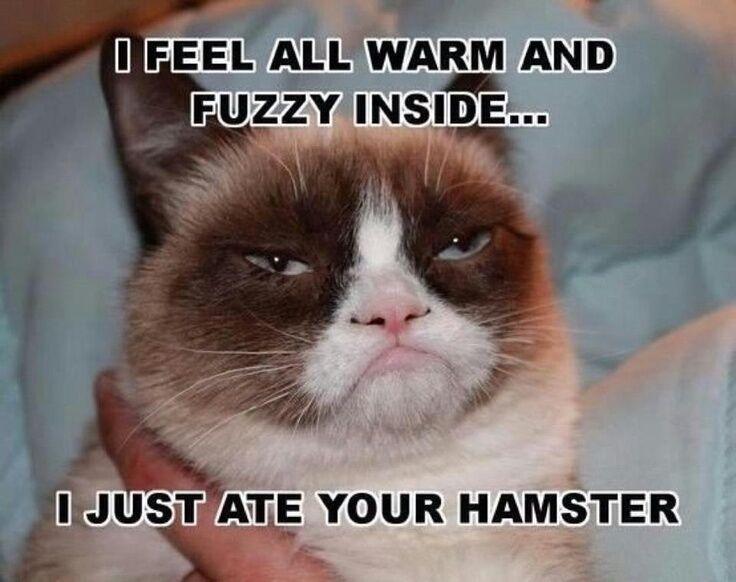 Funny Grumpy Cat Hamster Refrigerator Magnet