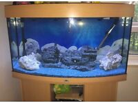 3 ft bow fronted jewel tank