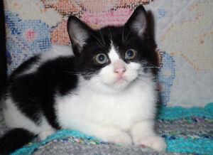 Cuddly Kitten, Vet Check
