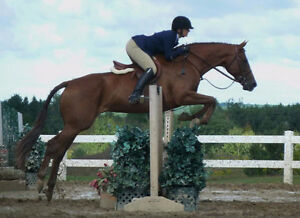 Many quality horses for part board