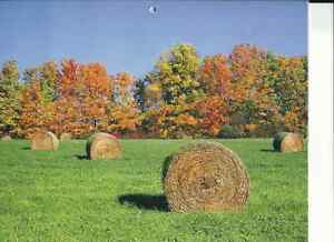 Farm Worker Cornwall Ontario image 1