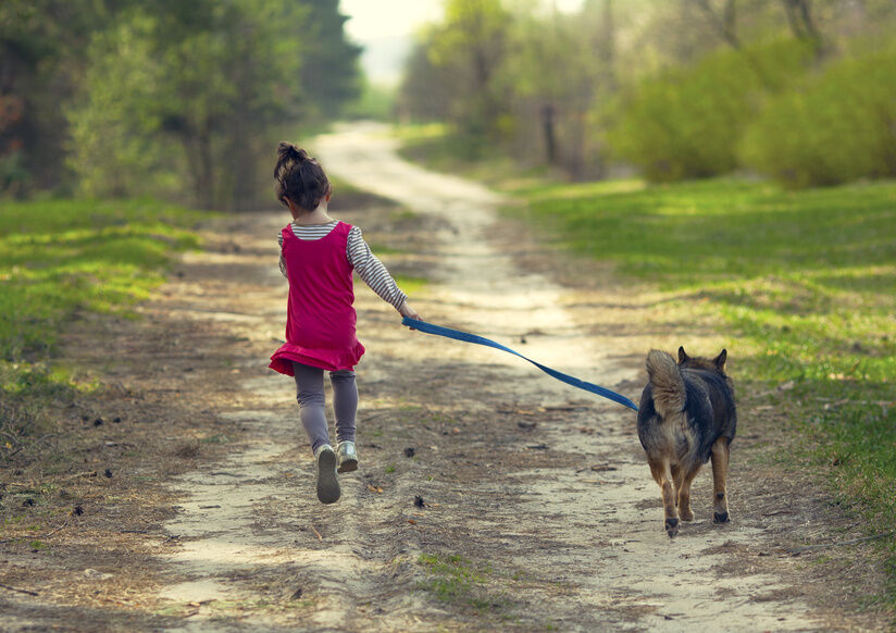 Top 3 Things to Consider When Purchasing Dog Leads
