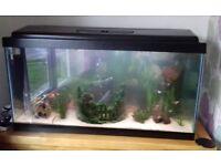 200 litre fish tank, 100x40x57cm, heater, filter, new lights, gravel (excluding fish)