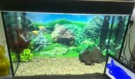 Fluval fish tank 350L