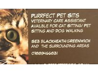 Cat Sitter, Veterinary Nurse, FULL DBS CHECK. References Available