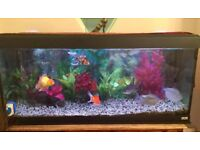 4ft fish tank aquarium with good fancy gold fish up. filter and air pump.