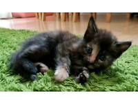 Beautiful kittens looking for loving homes