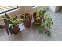 Indoor plants in pots