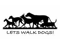 Dog Walker & Pet Sitter in and around Burnopfield