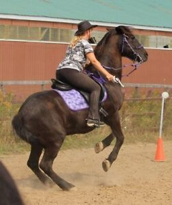 Horse trick training driving mounted games archery firearms more