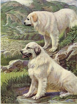 Great Pyrenees - Vintage Color Dog Print - MATTED