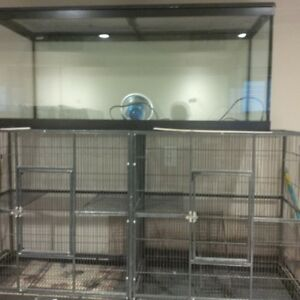 Large Reptile Tank and Large Pet (Guinea pigs, rabbits,etc) cage