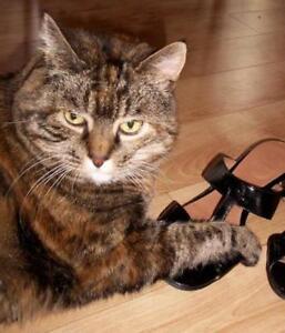 "Senior Female Cat - Domestic Short Hair-Torbie: ""Zoé"""