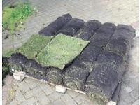 10 x rolls of grass turf