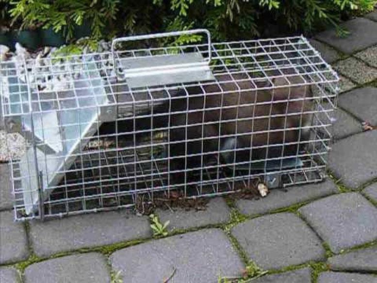 Marderfalle  SUPER TRAP SUPER FALLE PROFESIONAL rattenfalle full pakiet NEU !!!