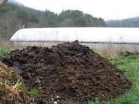 Top Quality Horse Manure