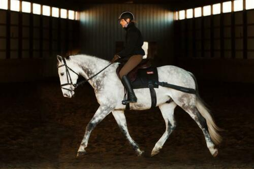 GENUINE EQUIBAND SYSTEM from Equicore Concepts for horse core conditioning