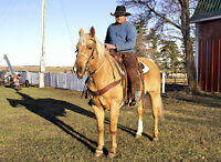 Fully Trained Palomino Mare