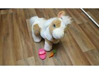 Butterscotch pony
