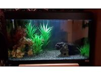 Fish tank, 2.5ft, approx 120ltr + Free cabinet stand