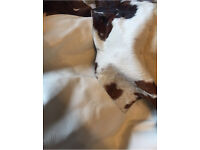 Tan & white cow hide and white leather