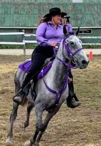 Trail Horse - Horses for sale