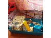 Female sirian hamster comes with everything needed