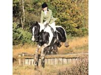 Bow 15.2hh Piebald mare, all-rounder for Share/Part Loan in Wokingham/Barkham