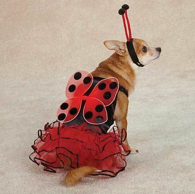 Casual Canine Lucky Lady Bug  Dog Halloween Costume XS-XL  Ladybug Pet](Lucky Lady Costume)
