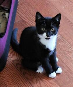 """Baby Female Cat: """"Rajah"""""""