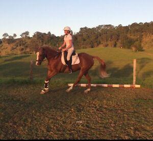Stock horse mare Gloucester Gloucester Area Preview