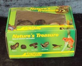 Lucky Reptile Nature's Treasure Decor Box