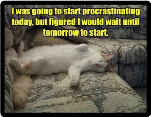 Funny Cat Procrastinating Refrigerator Magnet