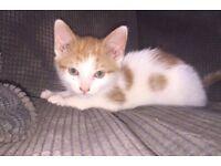 Two lovely kittens for sale